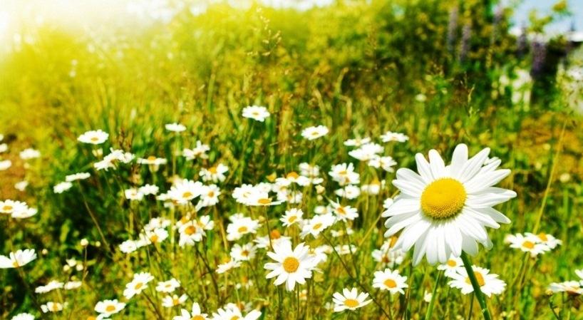 Vremenska prognoza: Stabilno i sunčano vrijeme