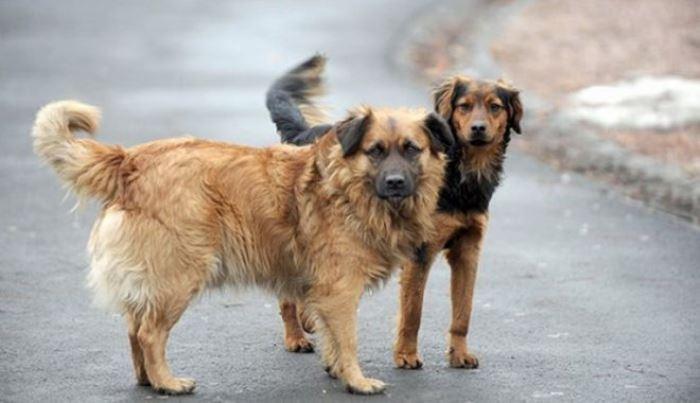 Ko ostavi psa na ulici u Italiji, plaća ogromnu kaznu i ide u zatvor
