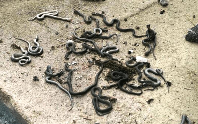 Ovo su najopasnije zmije u BiH (FOTO)