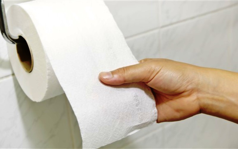 Sječe šuma sve češće radi toalet papira