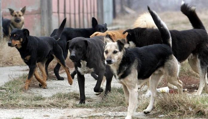 Psi napali građane u Banjaluci, jedna osoba umrla