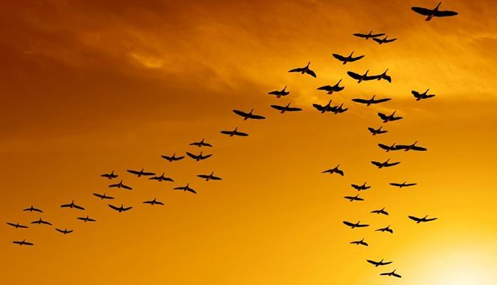 Ptice sve manje – zagrijavanje sve veće