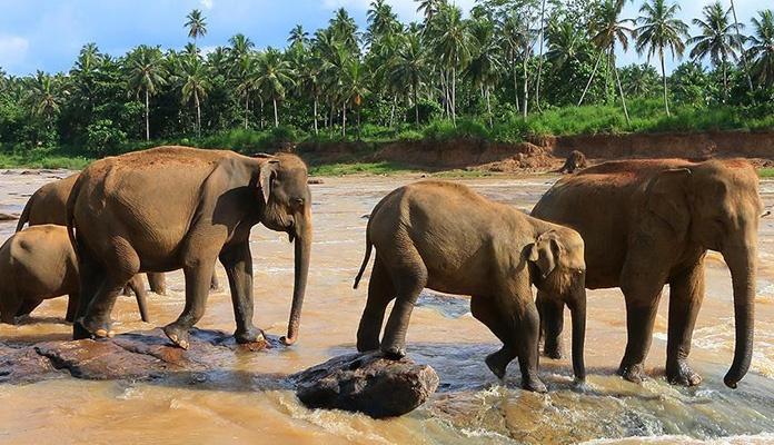 Zimbabve: Od posljedica suše uginulo više od 200 slonova