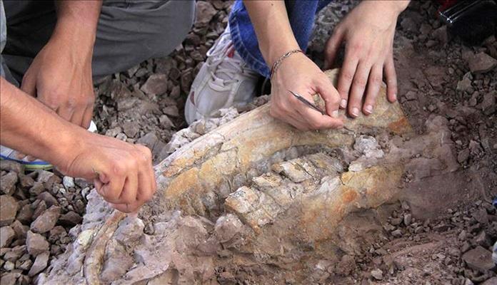 Otkriven fosil najvećeg dinosaura ikad, veličine oko 35 metara
