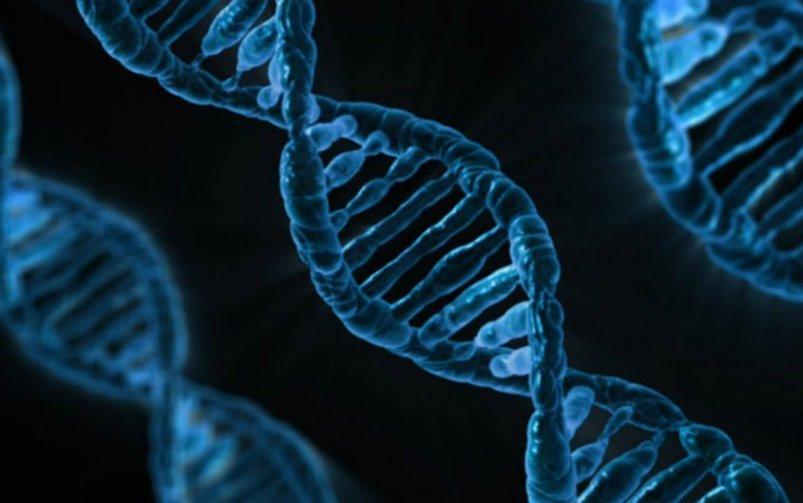 Čast zapisana u DNK: Prije smrt nego sramota