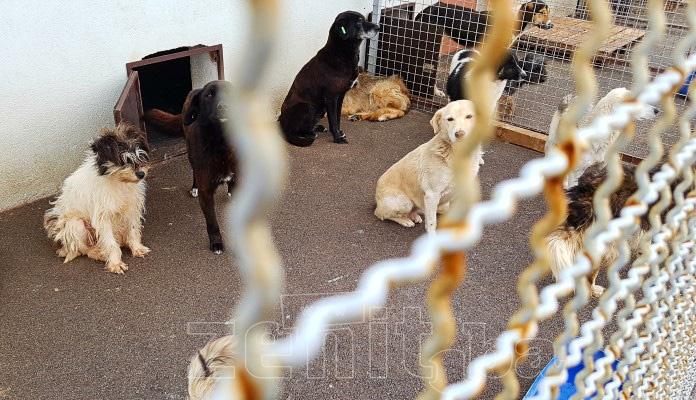 """""""Happy dogs"""" preuzeo brigu o azilu i hvatanju napuštenih pasa u Zenici"""