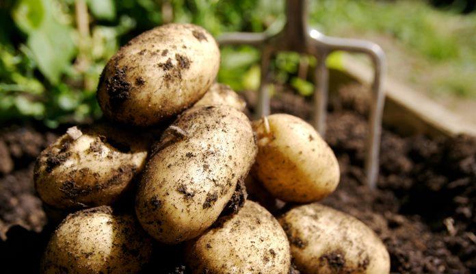 Krompir ne smije biti pržen duže od tri i pol minute