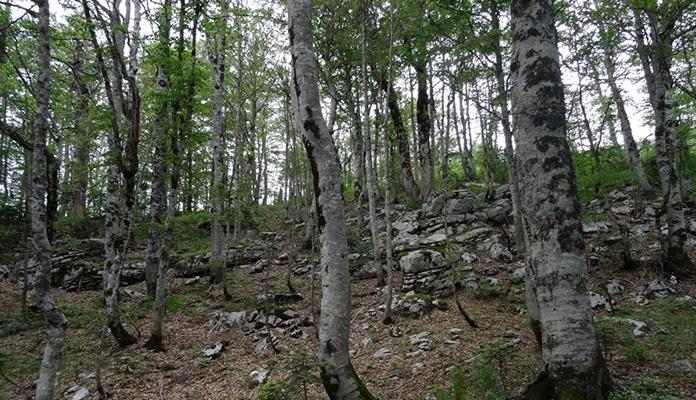Akcija pošumljavanja na području ZDK povodom 21. marta – Međunarodnog dana šuma
