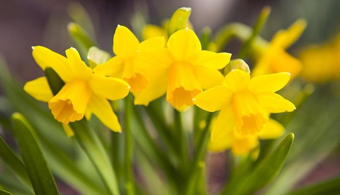 Čudotvoran lijek protiv raka raste u svakom vrtu