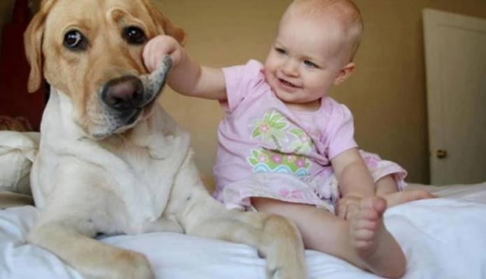Da li djetetu trebate priuštiti ljubimca?