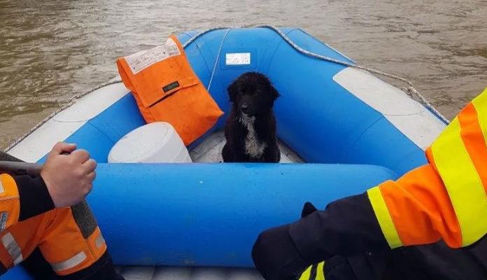 Pripadnici Civilne zaštite FBiH spasili psa iz rijeke Bosne kod Zenice