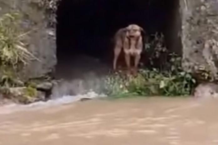 Pogledajte spašavanje psa od strane vatrogasaca iz nabujale Lašve  (VIDEO)