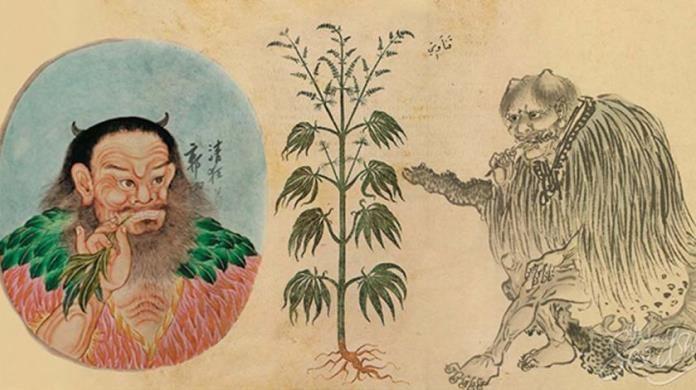 Najstariji tragovi uživanja kanabisa pronađeni u Kini