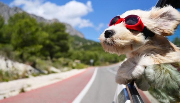 Najbolji savjeti za odlazak na putovanje sa kućnim ljubimcem