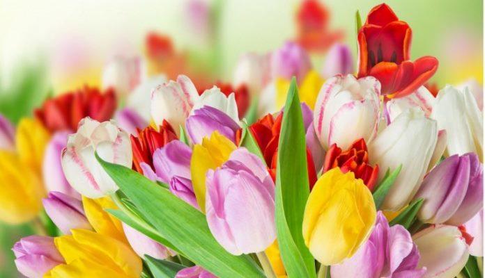 Cvijeće ima izvanrednu moć nad ljudima