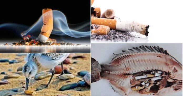 Opušci cigareta najveći zagađivači u prirodi