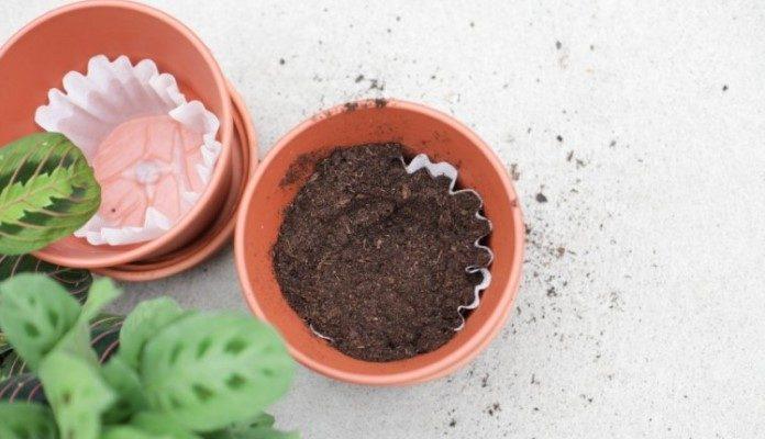 Stavite u saksiju filtera za kafu i cvijeće neće uvenuti