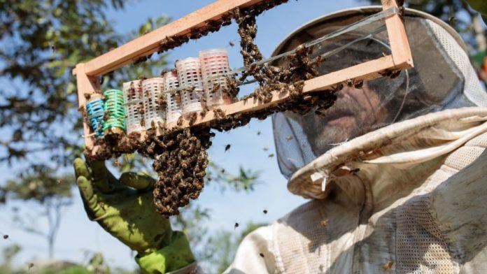 Za 3 mjeseca u Brazilu uginulo više od 500 miliona pčela