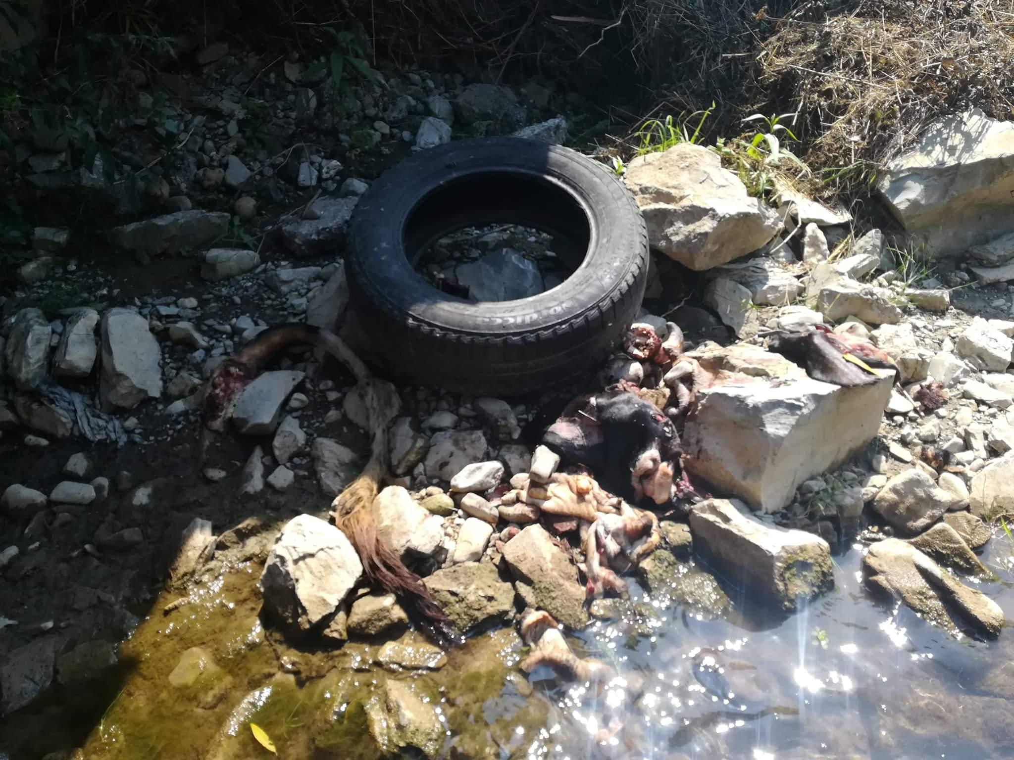 Kurbanski otpad u zeničkoj Babinoj rijeci (FOTO)