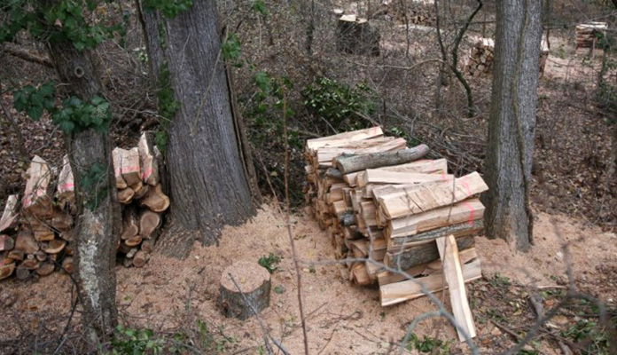 Šuma Drva