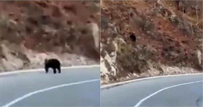 U mjestu Galica, na obroncima Vlašića, medvjed se prošetao cestom (VIDEO)