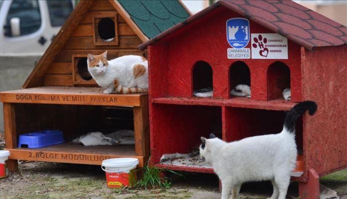 Tokom zime u Turskoj će se postaviti hiljadu kuća za mačke i pse