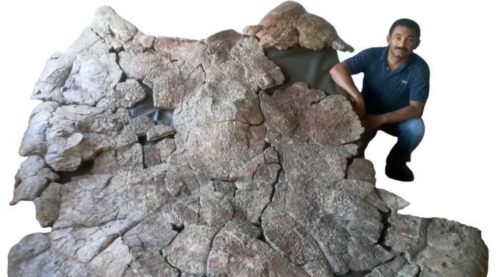 Kornjaca Fosil
