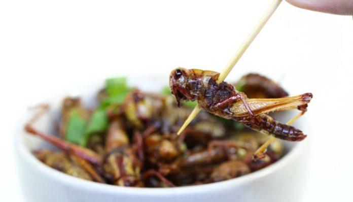 Europa će uskoro odobriti prodaju kukaca za prehranu ljudi