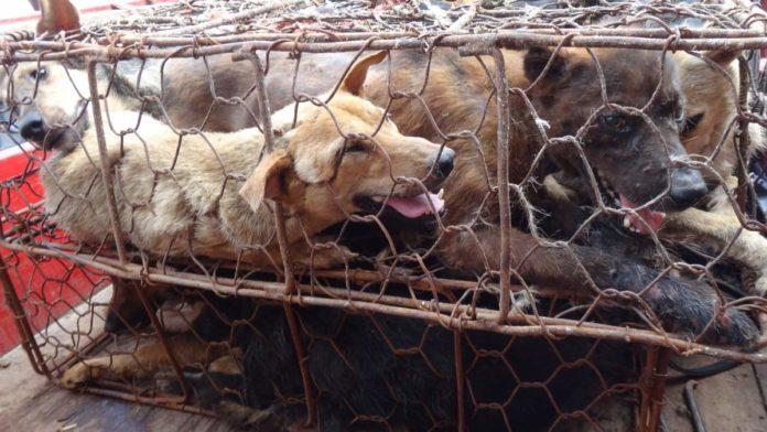 Kineski grad Shenzhen zabranio jesti pse i mačke