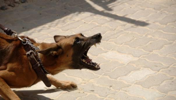 Pas izgrizao djevojčicu u Prijedoru, prebačena u banjalučku bolnicu
