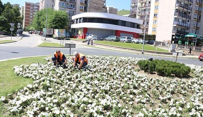Obnovljene sadnice Cvijeta Srebrenice na kružnom toku u Mokušnicama