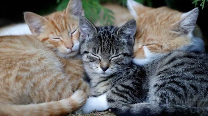 Danas je Međunarodni dan mačaka