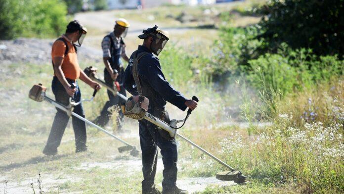 Uklanjanje ambrozije na području grada Zenice