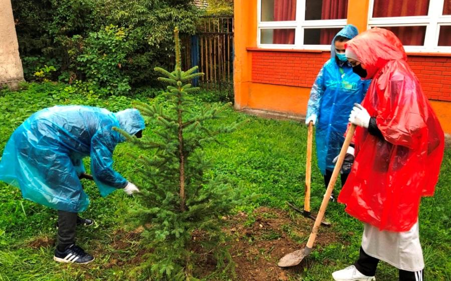 Akcija Sadnje Drveca U Zenici