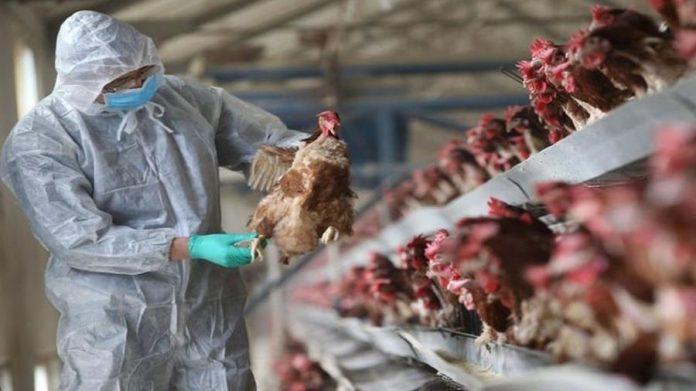 Nakon slučaja u Hrvatskoj, oprez zbog ptičije gripe potreban i u BiH