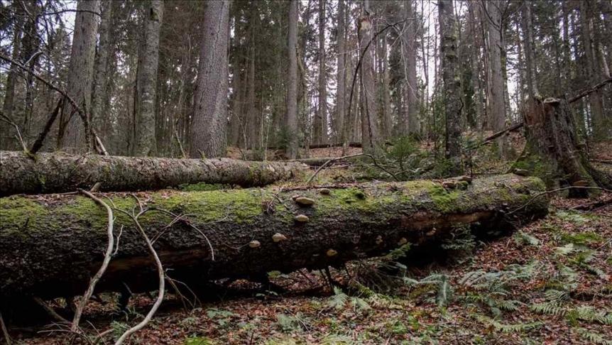 Prašuma Јanj kod Šipova uvrštena na UNESCO listu svjetske baštine