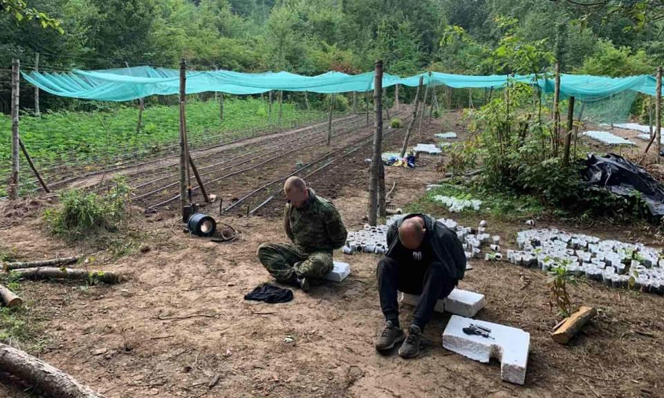 Najveća akcija GPBiH: Otkriven kamp za proizvodnju droge