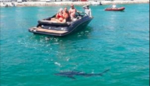 Morski Pas Snimljen U Jadranu Cijeli Dan Je Plivao Uz Obalu Sibenik Ajkula 60e0ce7991d22